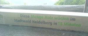 Heidelberg Forest DSC06728