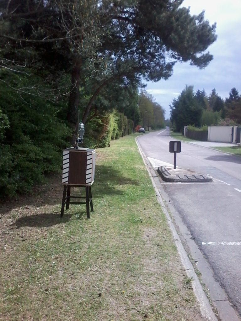 Mangrovia's Rad-Art